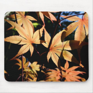 Japanese Maples (4) Mouse Pad