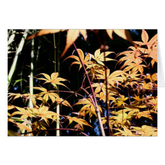 Japanese Maples (5) Card
