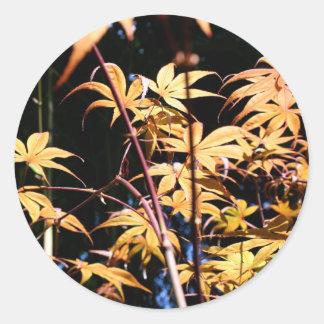 Japanese Maples (5) Classic Round Sticker