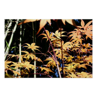 Japanese Maples 5 Floral Photography Poster