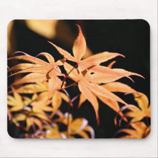Japanese Maples (6) Mouse Pad