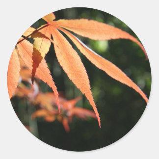 Japanese Maples 7 Sticker