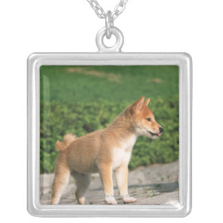 Japanese Midget Shiba 2 Silver Plated Necklace