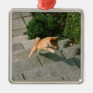 Japanese Midget Shiba 3 Metal Ornament