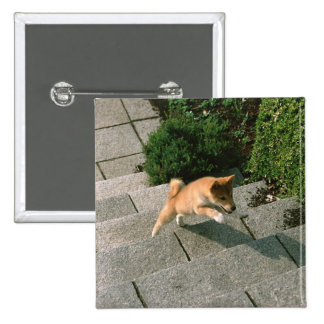 Japanese Midget Shiba 3 Pinback Button