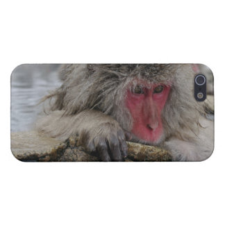 Japanese monkey relaxing in hot spring case for iPhone SE/5/5s
