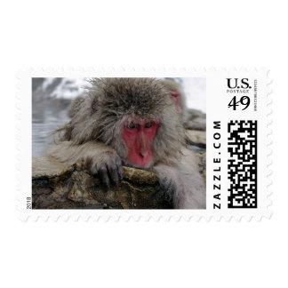 Japanese monkey relaxing in hot spring postage