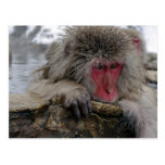 Japanese monkey relaxing in hot spring postcard