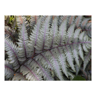 Japanese Painted Fern Floral Photo Poster