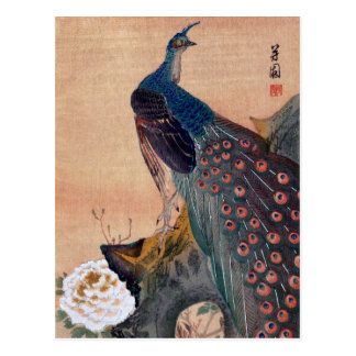 Japanese Peacock no.1 Postcard