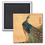 Japanese Peacock no.2 2 Inch Square Magnet