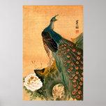 Japanese Peacock no.2 Poster