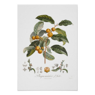 Japanese persimmon poster