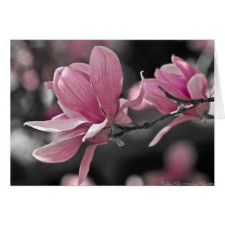 Japanese Pink Saucer Magnolia Card