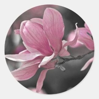 Japanese Pink Saucer Magnolia Classic Round Sticker