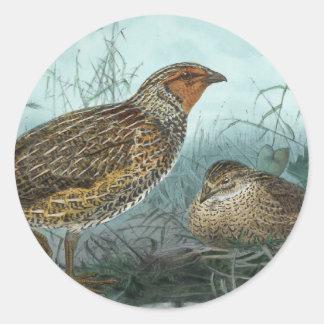 Japanese Quail Vintage Bird Illustration Classic Round Sticker