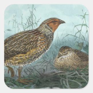 Japanese Quail Vintage Bird Illustration Square Sticker