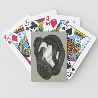 Japanese Rat Snake, beautifull and caring mother! Bicycle Playing Cards