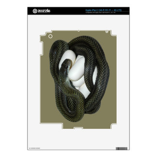 Japanese Rat Snake, beautifull and caring mother! Decal For iPad 3