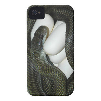 Japanese Rat Snake, beautifull and caring mother! iPhone 4 Cover