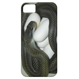 Japanese Rat Snake, beautifull and caring mother! iPhone SE/5/5s Case