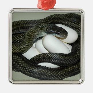Japanese Rat Snake, beautifull and caring mother! Metal Ornament