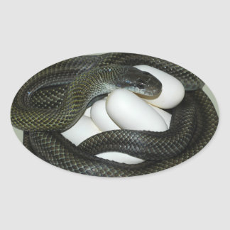 Japanese Rat Snake, beautifull and caring mother! Oval Sticker