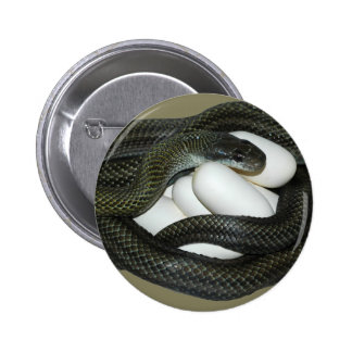 Japanese Rat Snake, beautifull and caring mother! Pinback Button