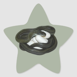 Japanese Rat Snake, beautifull and caring mother! Star Sticker
