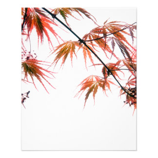 Japanese Red Maple Art Photography Flyer