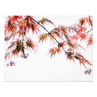 Japanese Red Maple Art Photography Photo Art