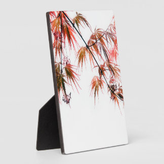 Japanese Red Maple Art Photography Plaque