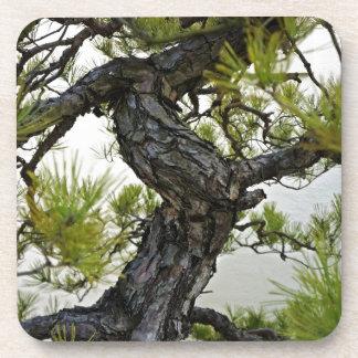 Japanese Red Pine Bonsai Tree Coasters