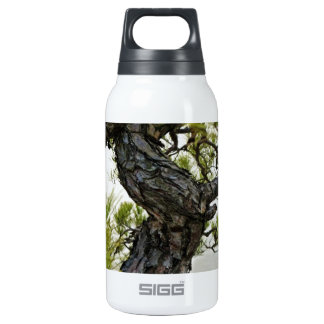 Japanese Red Pine Bonsai Tree Insulated Water Bottle