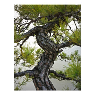 Japanese Red Pine Bonsai Tree Letterhead Template