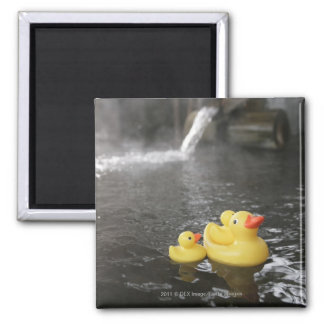 Japanese Rubber Duckies 2 Inch Square Magnet