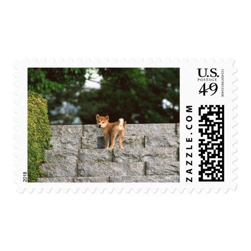 Japanese Shiba 4 Postage Stamp