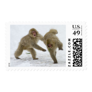 Japanese Snow Monkey cubs playing on snow Postage
