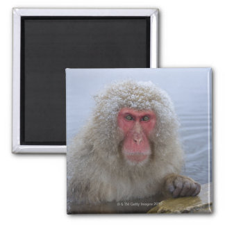 Japanese Snow Monkey in hotspring Magnets