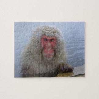 Japanese Snow Monkey in hotspring Jigsaw Puzzle