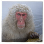 Japanese Snow Monkey in hotspring Large Square Tile