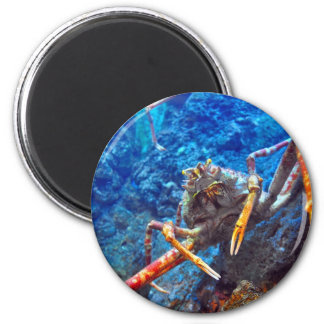 Japanese Spider Crab Magnet