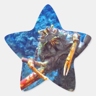 Japanese Spider Crab Star Sticker