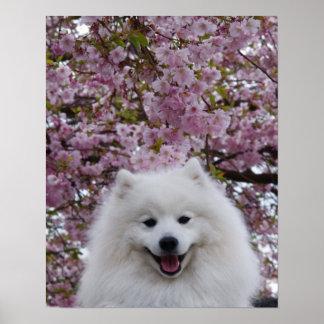 Japanese Spitz American Eskimo Cherry Blossom Prin Posters
