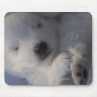Japanese Spitz American Eskimo young puppy Mouse Pad