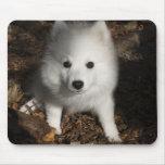 Japanese Spitz puppy Mousepads