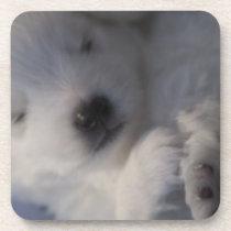 Japanese Spitz sleeping puppy Coasters