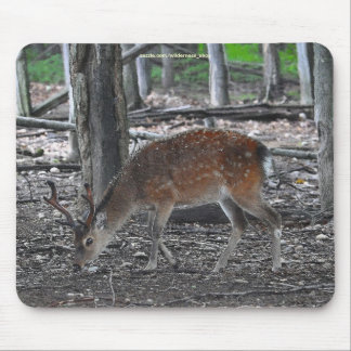 Japanese Spotted Deer Buck Animal Wildlife Photo Mouse Pad