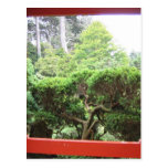 Japanese Tea Garden Postcard