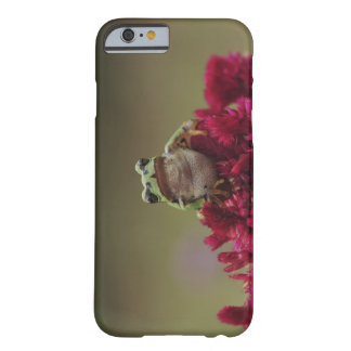 Japanese tree frog (Hyla japonica) on flowers, Barely There iPhone 6 Case